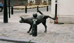 Брюссель-писающая-собака