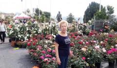 Грасс Продажа роз
